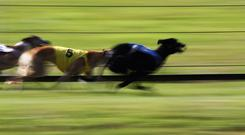 'Priceless Blake was Ireland's sole winner as he came home clear in the opening heat' (stock photo)