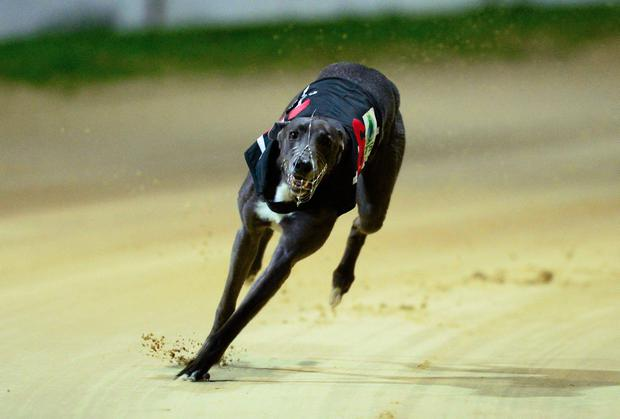 John McGee's Lazy Leg has been showing the superior early pace and can sneak around the bend in front (Stock picture)