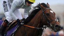 Frankel, ridden by Tom Queally, has a gallop at Newmarket racecourse in 2012. Photo: Alan Crowhurst/Getty