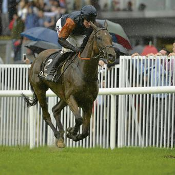 Rebel Fitz, under Barry Geraghty, on the way to winning the Guinness Novice Steeplechase