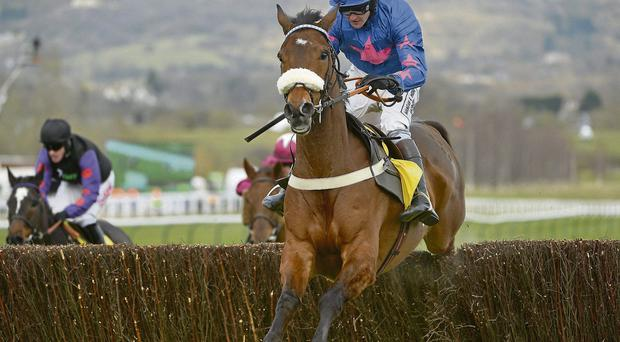Cue Card, with Joe Tizzard up, jumps the last on the way to winning the Ryanair Chase at Cheltenham last year.