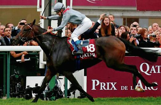 Treve will be one of the star attractions at Royal Ascot