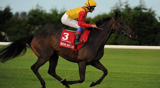 Snow Fairy, with Frankie Dettori up, canters to the start for The Red Mills Irish Champion Stakes