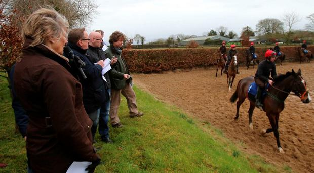 Jessica Harrington watches Jezki and jockey Mark Bolger during yesterday's Commonstown Racing Stables visit