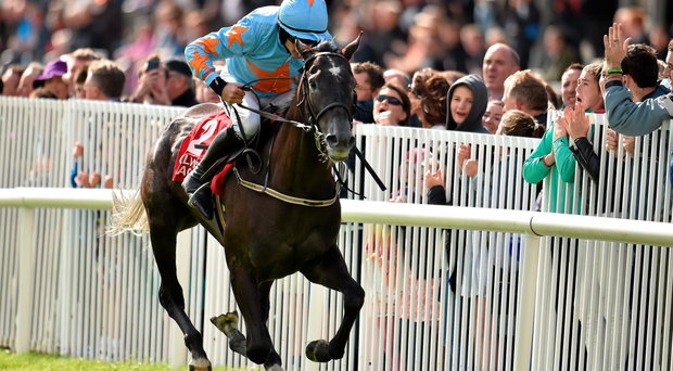 Bachasson can shine for Paul Townend in the Royal Bond Hurdle