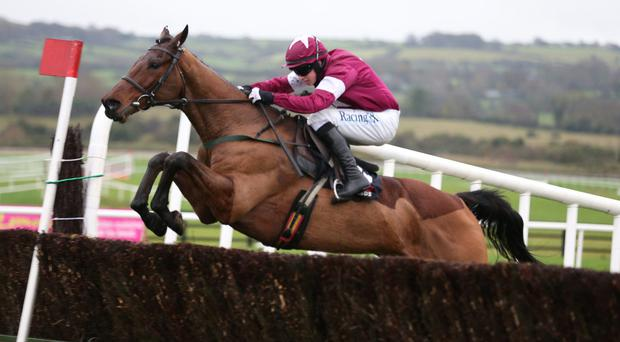 Outlander can land today's feature at Limerick for Willie Mullins and his nephew David (Photo: Caroline Norris)