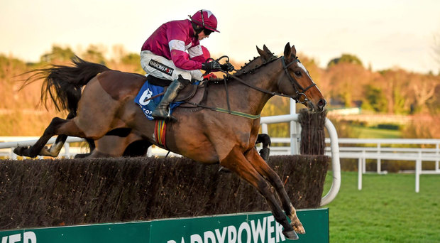 Don Poli has progressed well since winning the novices' chase at Leopardstown last year with Bryan Cooper on board Photo:Sportsfile