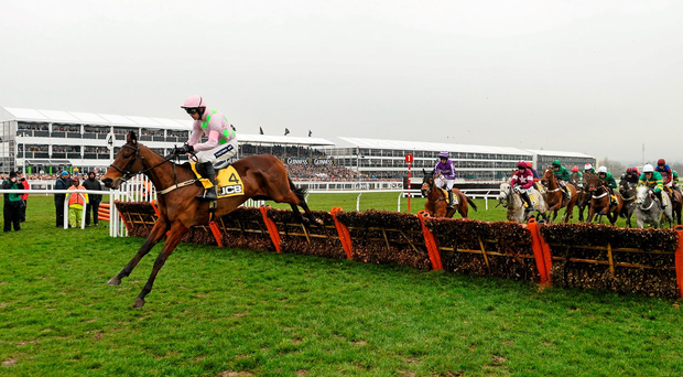 Dicosimo, with Ruby Walsh on board, leads the way at Cheltenham last March before running out of steam Photo:Sportsfile