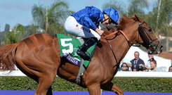 Wuheida and William Buick the nine-furlong Filly and Mare Turf at the Breeders Cup
