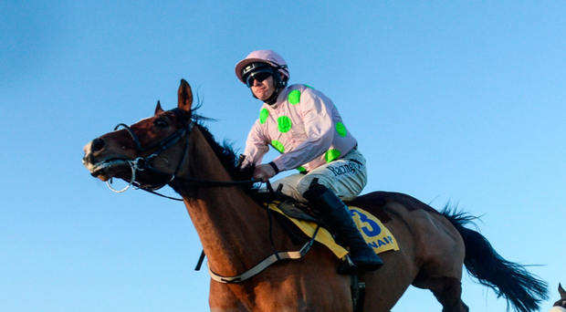 The Willie Mullins-trained Faugheen is set to return to Leopardstown for this weekend's Dublin Racing Festival David Fitzgerald/Sportsfile