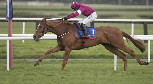 Samcro, with Lisa O'Neill up, won by 17 lengths at Fairyhouse last Easter. The novice also triumphed at Cheltenham this year and is considered to be one of Irish racing's best prospects in recent years