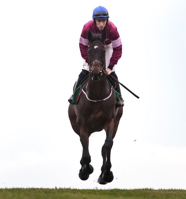 Apple's Jade is odds on to defend her crown in Friday's Squared Financial Christmas Hurdle at Leopardstown. Photo: Racing Post