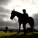 Willie Mullins (left) watches his string on the gallops at Cheltenham last week. Photo: Gerry Mooney