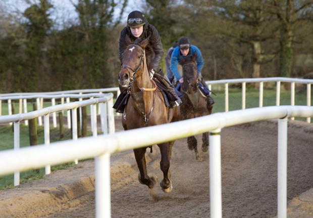 Luke Dempsey puts Derrinross through his paces at the family stables in Derrinturn, Carbury, Co Kildare ahead of Cheltenham