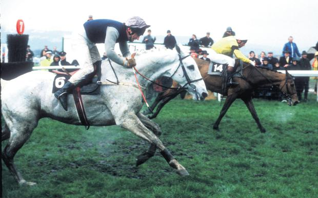 Yahoo has no answer to the late charge of Desert Orchid and Simon Sherwood Orchid and Simon Sherwood Yahoo
