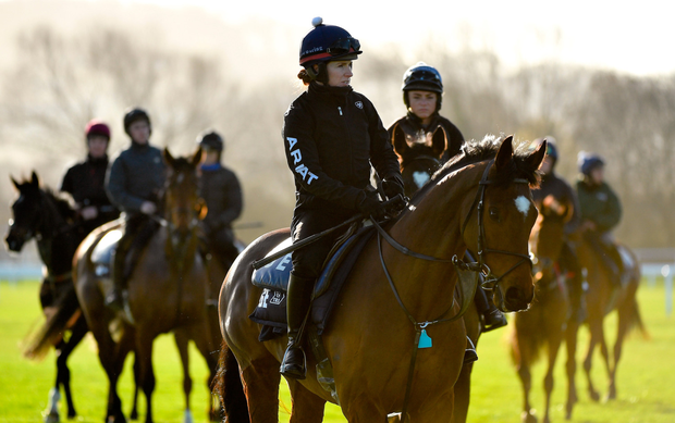 Ready to Roll: Tiger Roll, with Lisa O'Neill on board, in relaxed mood on the gallops at Prestbury Park on Monday. Photo: Sportsfile