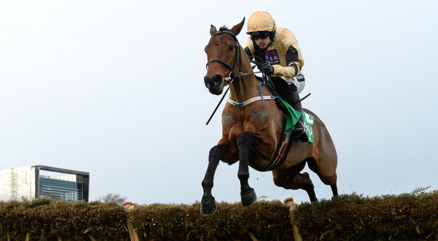 Nichols Canyon suffered a fatal fall at Punchestown. Photo: Sportsfile