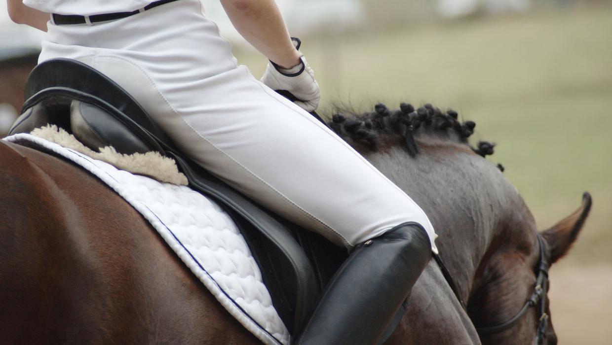 Equine virus outbreak forces cancellation of European action