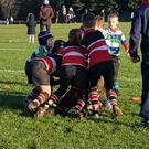 Wicklow RFC's minis compete for the ball against their Gorey RFC counterparts last weekend