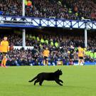A black cat did little to help Everton at home to Wolves (Peter Byrne/PA)