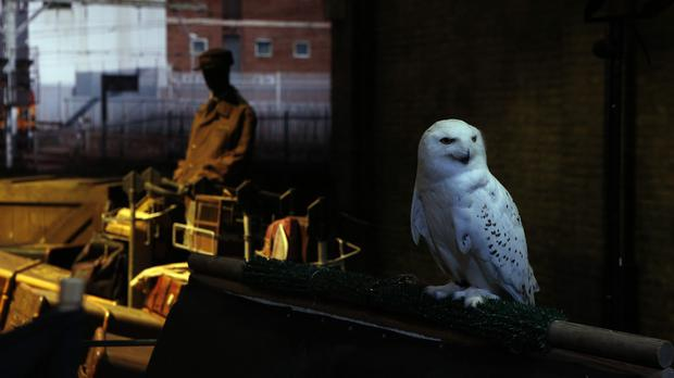 An animal rights group has raised concerns about the use of live animals on a Harry Potter studio tour