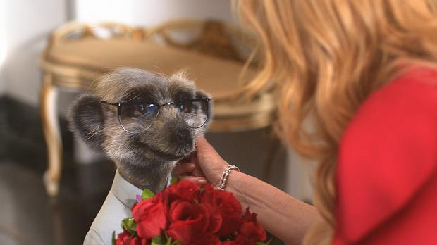 Meerkat Aleksandr's sidekick Sergei has had his head turned by Nicole Kidman