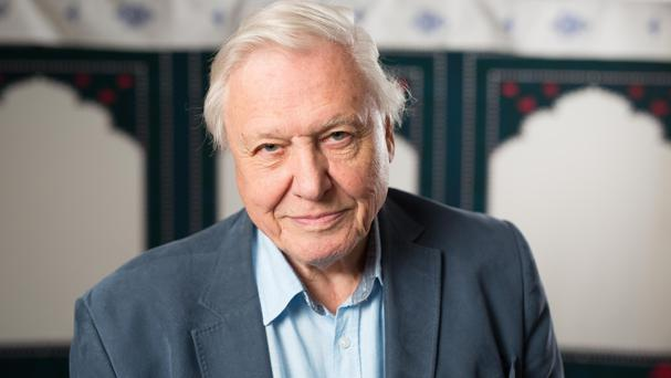 TV's Sir David Attenborough was described by Michaela Strachan of Springwatch as 'a god of wildlife presenters