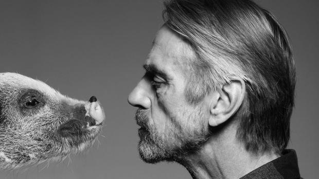 Jeremy Irons looking at a pig (Farms Not Factories)
