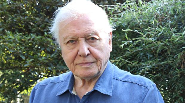 Sir David Attenborough says Planet Earth II is tapping into the public's need for sanctuary