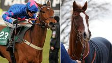Native River and Cue Card are both owned by Colin Tizzard: Paul Mohan / SPORTSFILE/PA Wire