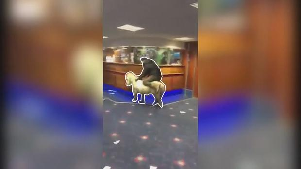 Lad receives to be a pony