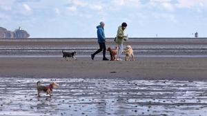 Dog walkers take advantage of a break in the weather on Sandymount strand.Picture Credit:Frank McGrath 5/5/21