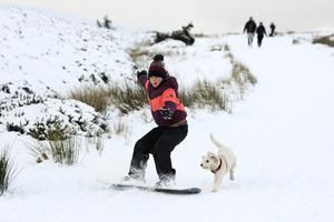 A snowboarder and their dog making the most of the fresh powder snow at the Wicklow Gap. Photo: Garry O'Neill