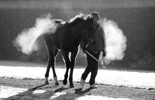 A frosty start to the February National Hunt Sale at Tattersalls in Co Kildare. Photo: Healy Racing