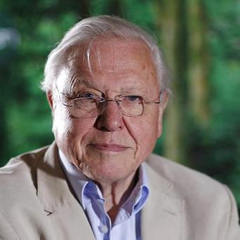 Sir David Attenborough reveals his most distressing moment in his 60-year career