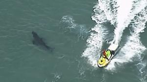 The 10ft shark attacked the surfer along the coast of Kingscliff, New South Wales (ABC/CH7/CH9 via AP)