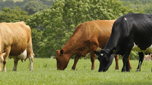 """The IFA has reportedly """"worked hard to drive a strong calf export trade"""" and are pushing """"to develop new markets"""", such as Turkey, where this month more than 3,000 young bulls depart for """"finishing"""" on local farms. Photo: Stock image"""