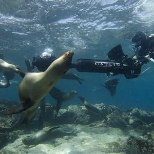 Christophe Bailhache navigates an SVII camera through a large group of sea lions during a survey dive at Champion Island in Galapagos (AP/Catlin Seaview Survey)