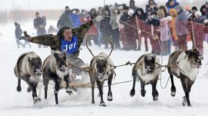 A Nenets man takes part in a reindeer race at the Reindeer Herder's Day in the city of Nadym (AP)