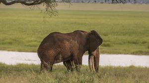 Archive picture of an African elephant (WWF/PA)