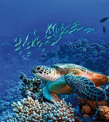 Marine life can be rebuilt in a human lifetime, experts say