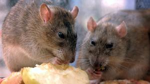 Rentokil warned that stockpiling can also lead to an increase in food waste and if food is not disposed of properly, infestations can be created.