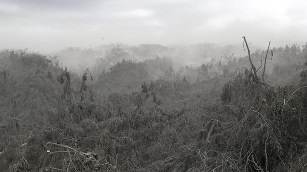 Clouds of volcanic ash rise up from damaged trees in Laurel, Batangas province (AP)
