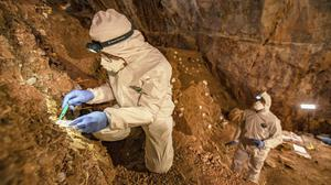 A researcher takes samples of cave sediments in Zacatecas, central Mexico (Devlin A Gandy via AP)