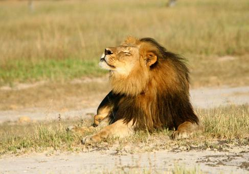 Cecil the Lion's son Xanda killed by trophy hunter