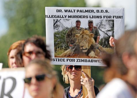 Protesters hold signs during a rally outside the River Bluff Dental clinic against the killing of a famous lion in Zimbabwe, in Bloomington, Minnesota