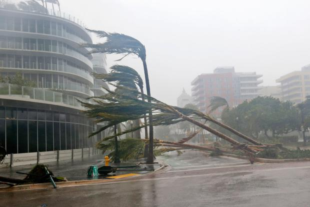 Palm trees bend and break in the teeth of the hurricane as it passes in Miami Beach, Florida. Photo: AP