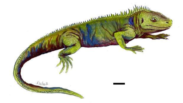 Artist's impression of reconstruction of what Clevosaurus sectumsemper may have looked like (University of Bristol/PA)