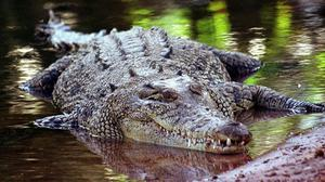 Crocodiles were responsible for some of the most unusual hospital admissions