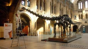 Dippy the Diplodocus undergoes a clean, as it is revealed he is to be replaced